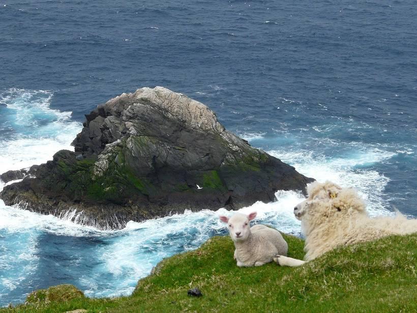 shetland 044