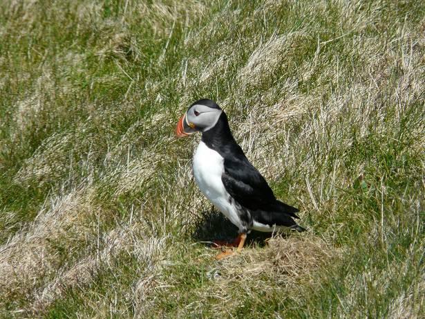 shetland36